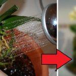 Nem a megszokott módon ültettem át az orchideát, a vendégeim meglepetten csodálták a gyönyörű növényeim!