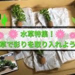 【水草特集】美しく育てる秘訣。彩り豊かなオススメ水草6選
