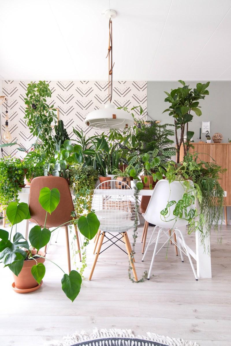 Ons interieur zonder groene planten.