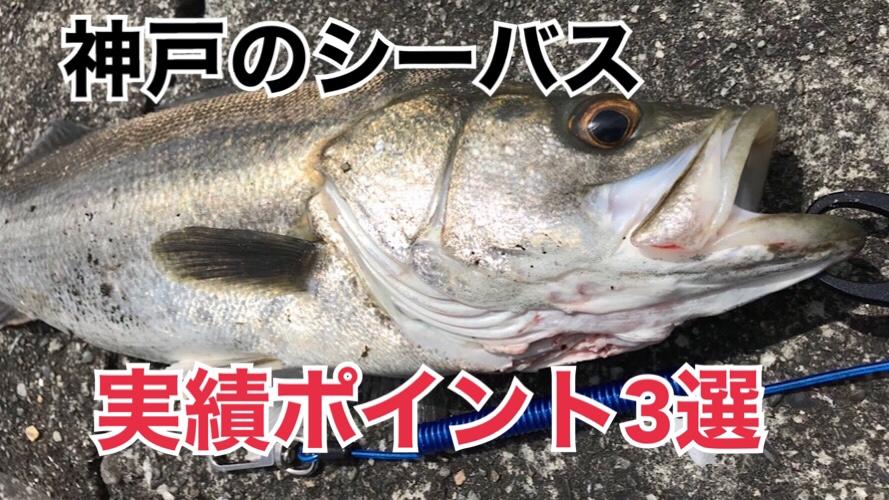 【兵庫】神戸周辺のシーバス釣り実績ポイント3選とおすすめルアー3選
