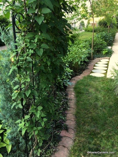 An inviting path through the garden.