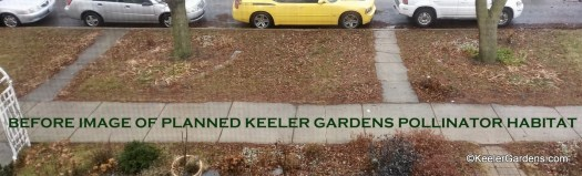 "This ""before"" image of the site for the planned Keeler Gardens Pollinator Habitat shows the parkway at Keeler Gardens in the early 2018. THe parkway is mostly grass with two green ash trees and a few existing plantings."