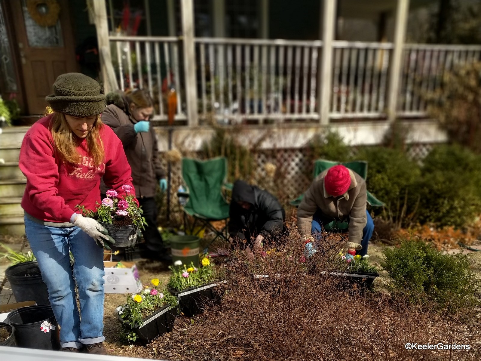Gina, the lead horticulturist specialist, is in the foreground holding a ranunculus as volunteers sit and neel in the background over pots they are planting with bulbs and other plants.