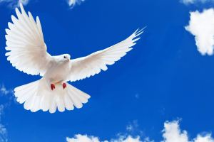 Welcome to Keene Dove Release