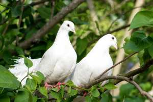 Special Events for Dove Release