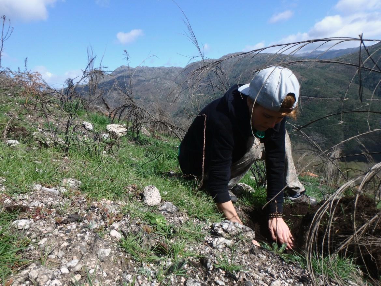 Reforesting Gerês