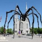 Spider(ma)Man