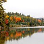 Algonquin Park Fall Colours – Lake of Two Rivers Camp Ground