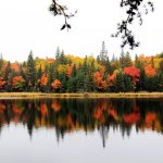 Algonquin Park Fall Colors