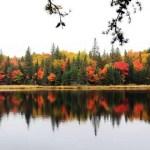 Algonquin Park Fall Colors