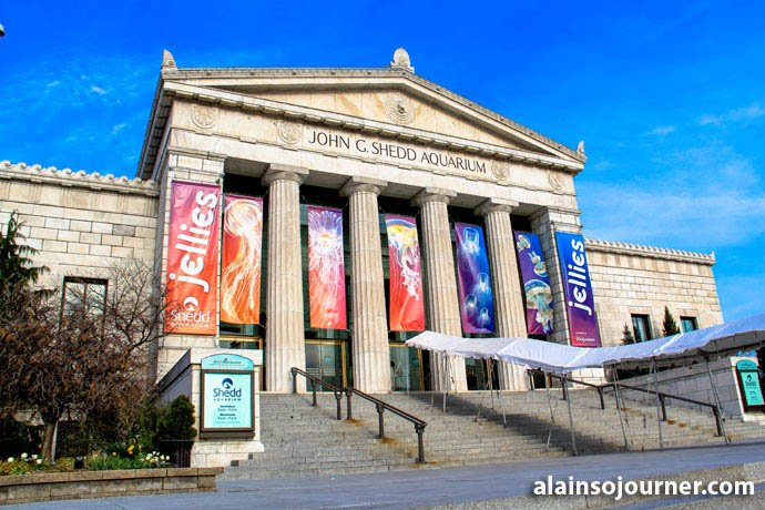 Shedd Aquarium Chicago Things To Do 1