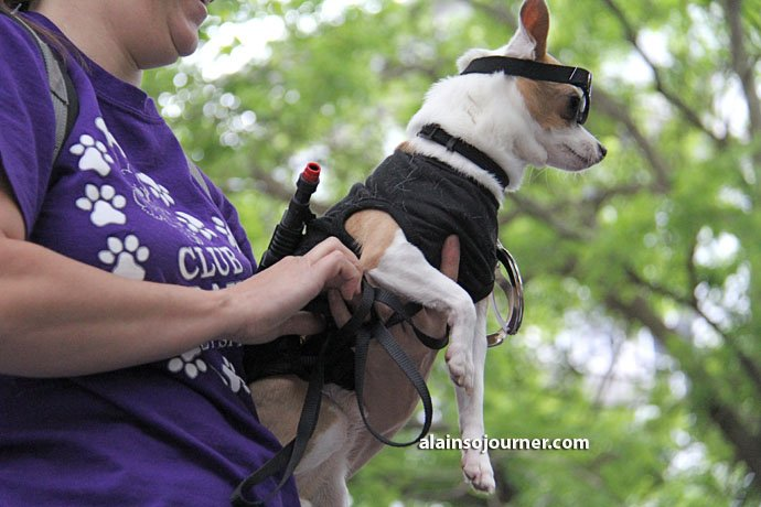 Woofstock - Toronto's Festival for Dogs