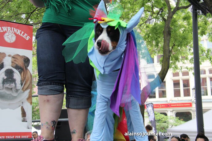 Woofstock Toronto Festival of Dogs 5