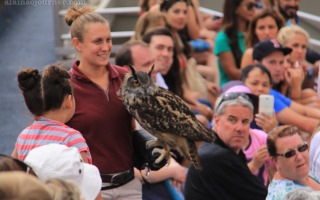 Olympus : The Owl from Harry Potterv