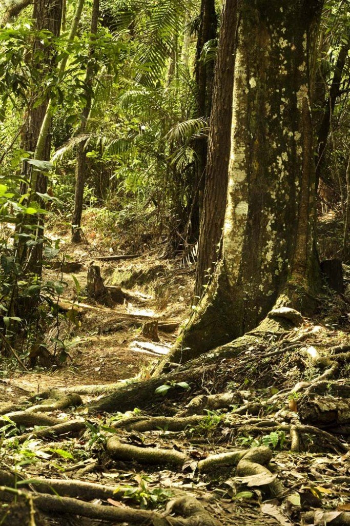 Things To Do in Brunei Jungle