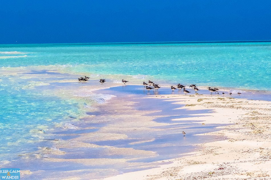 This Tiny White Beach Island is in Saudi Arabia.