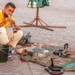 The Snake Charmers of Marrakesh