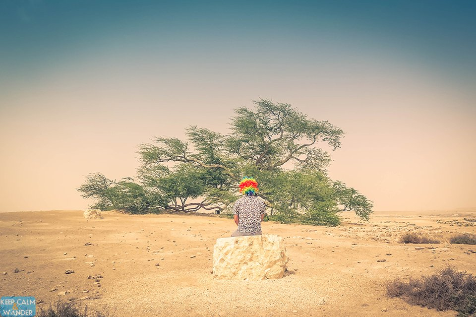 The Tree Of Life In Bahrain A Miracle Desert