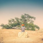 The Tree of Life in Bahrain – A Miracle in the Desert