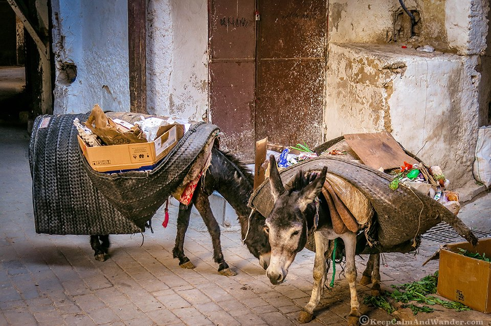 An early walk at the medina in Fes, Morocco.