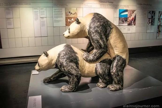 New York's Museum of Sex.