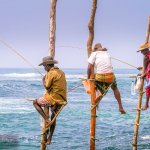 These Fishermen on Stilts in Sri Lanka are Fishing for Money