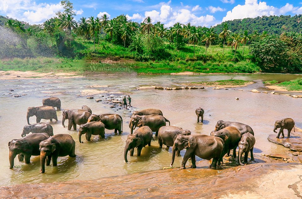 8 Days in Sri Lanka (Pinnawala Elephant Orphanage)