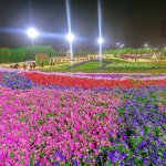 Photos From Yanbu Flower Festival 2018 – The World's Largest Carpet of Flowers