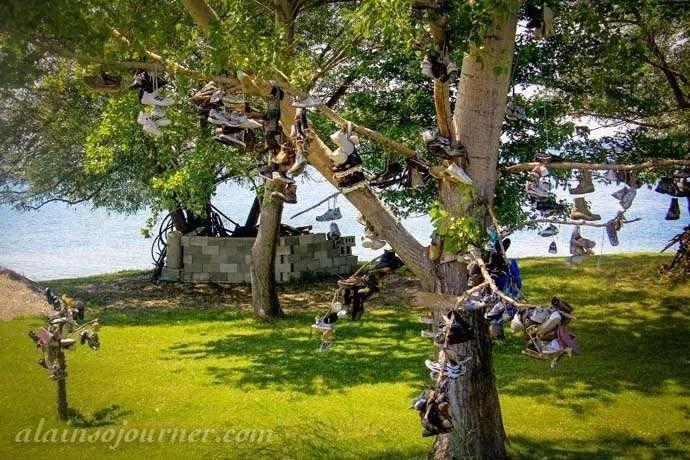 Pelee Island Shoe Tree