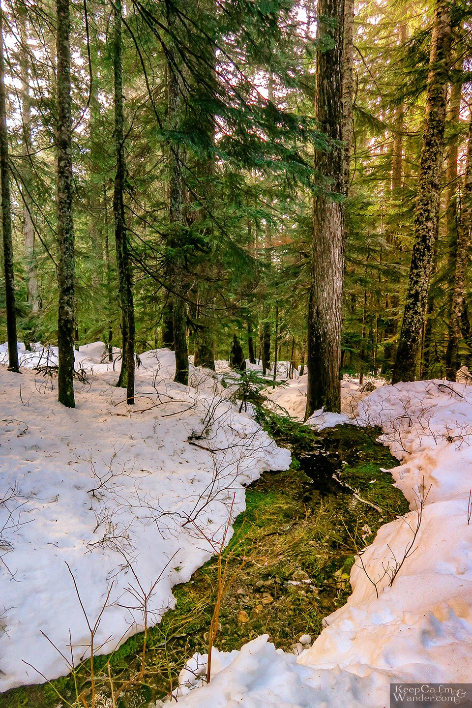 The Hollyburn Lodge Hiking Trail in Winter (West Vancouver, British Columbia). Canada Parks Travel Blog