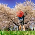 Springtime at Queen Elizabeth Park in Vancouver