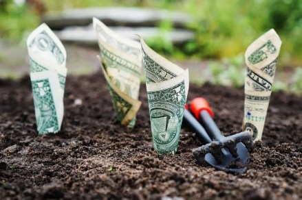 Dollar bills seeming to grow out of dirt