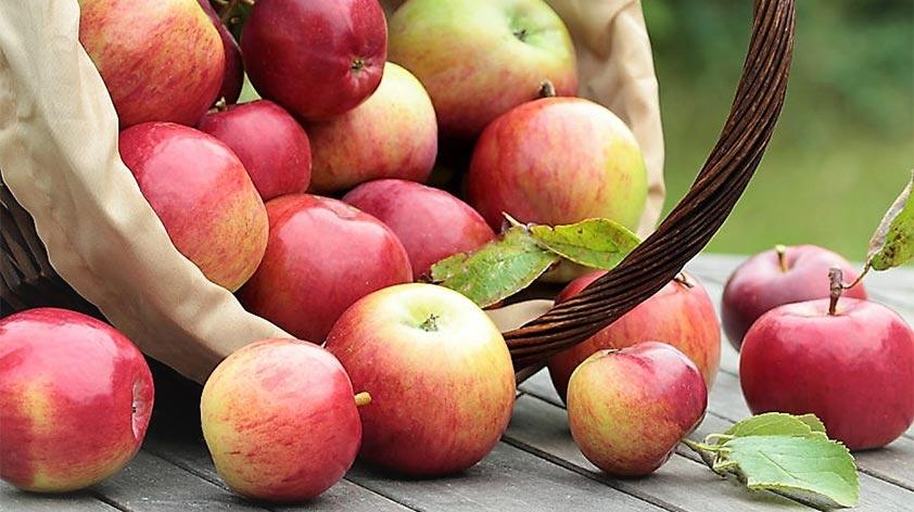 Top 5 Health Benefits of Apples! - Keep Fit Kingdom
