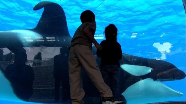 blackfishtank2