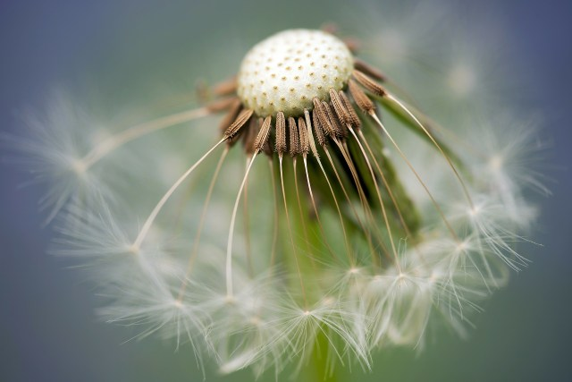 """Wonder at reality requires the humility to kneel before a dandelion"" - Fr. Dubay"