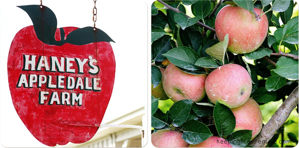 apple orchard field trip