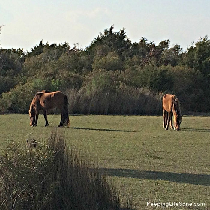 Wild horses in grass