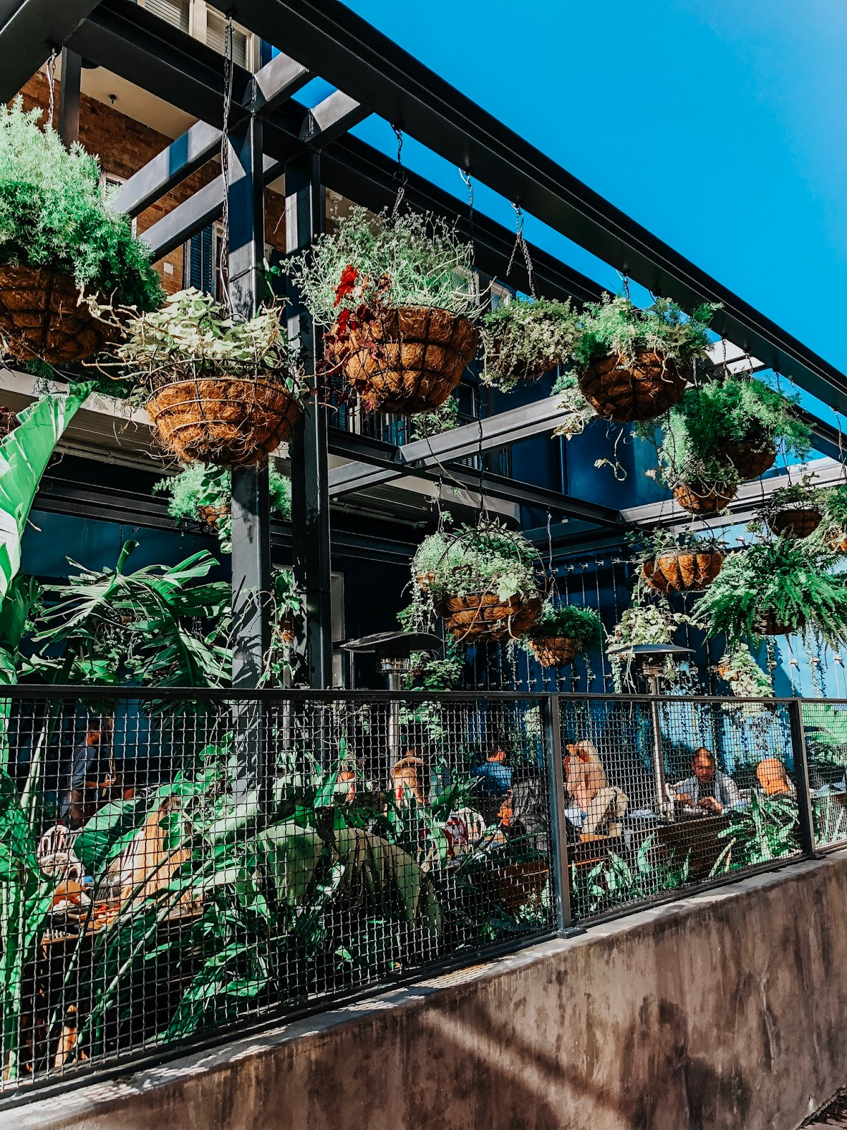 Cute corner restaurant in New Orleans with plants strung up for decoration