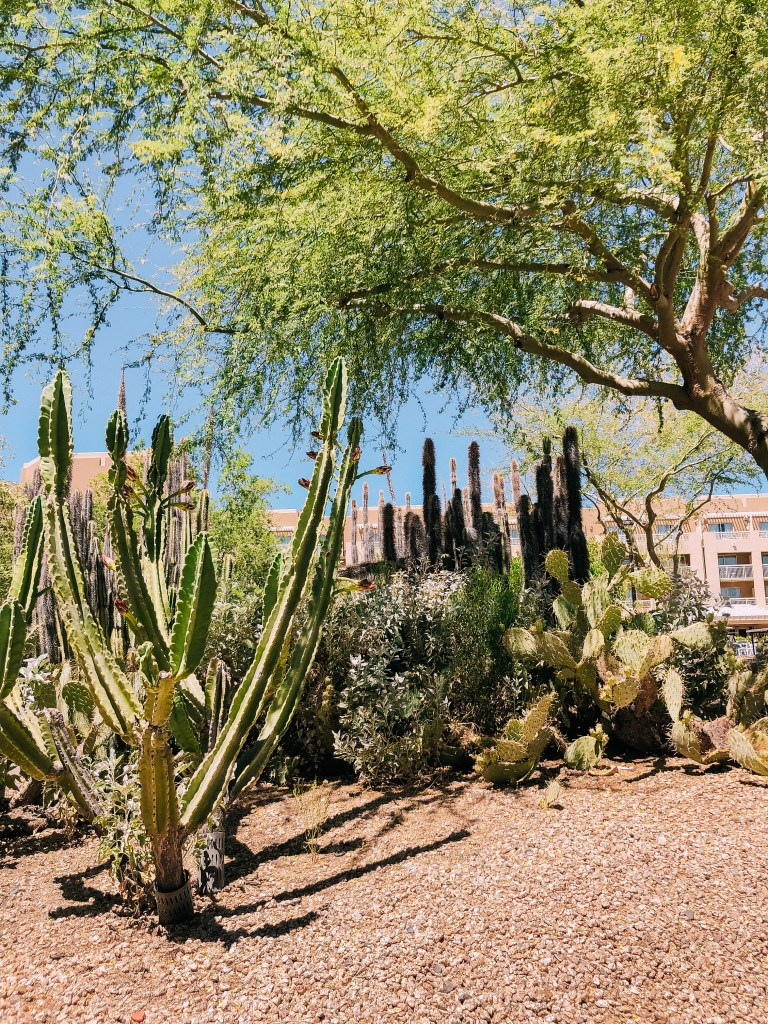 Phoenix Arizona travel guide: where to stay, what to do, and where to go in Phoenix/Scottsdale Arizona