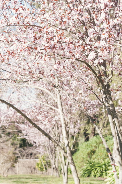 blossoms at menabillie manor
