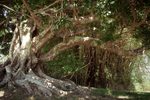 Yin & Yang Tree, Summer Hills Retreat
