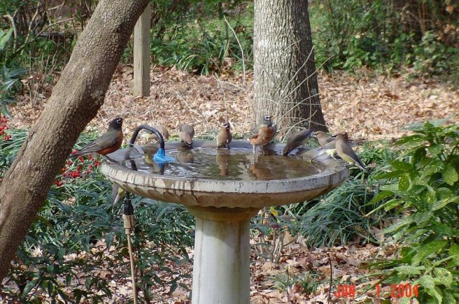 Water in the birdbath attracts a variety of species. Photo: Ernie McLaney
