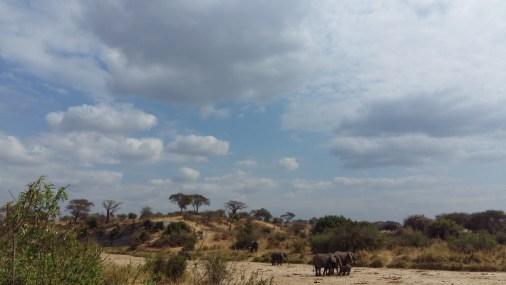Elephants in Tarangire National Parc