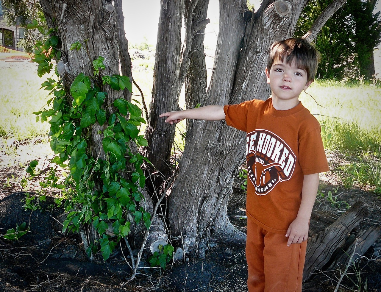 Systemic steroids for poison ivy how does steroids help build muscle