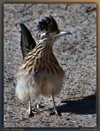 roadrunner_tedgrussing