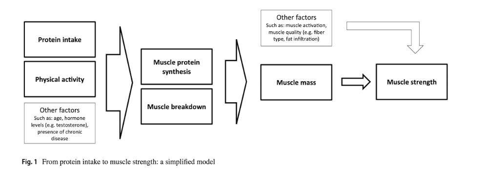 protein for arthritis