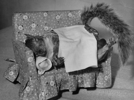 nina-leen-tommy-tucker-the-squirrel-sleeping-on-a-tiny-couch