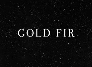 Gold Fir – Night Walk