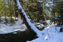 Nescopeck State park 083