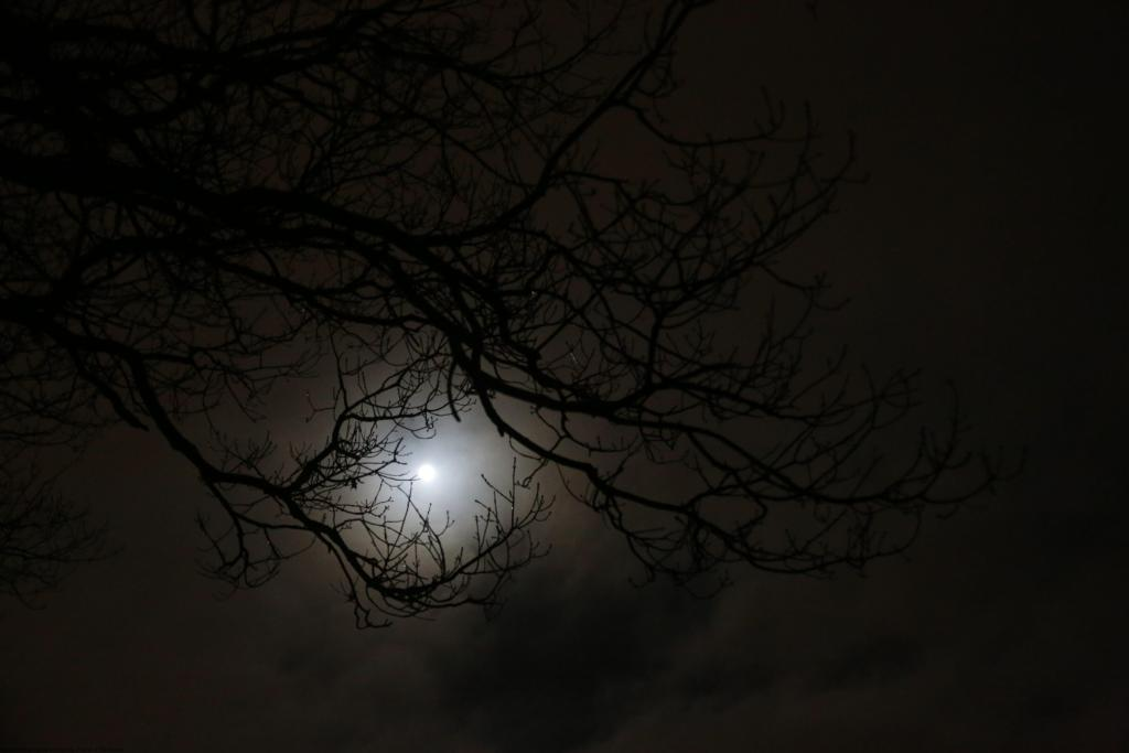 Cold February Moon 027